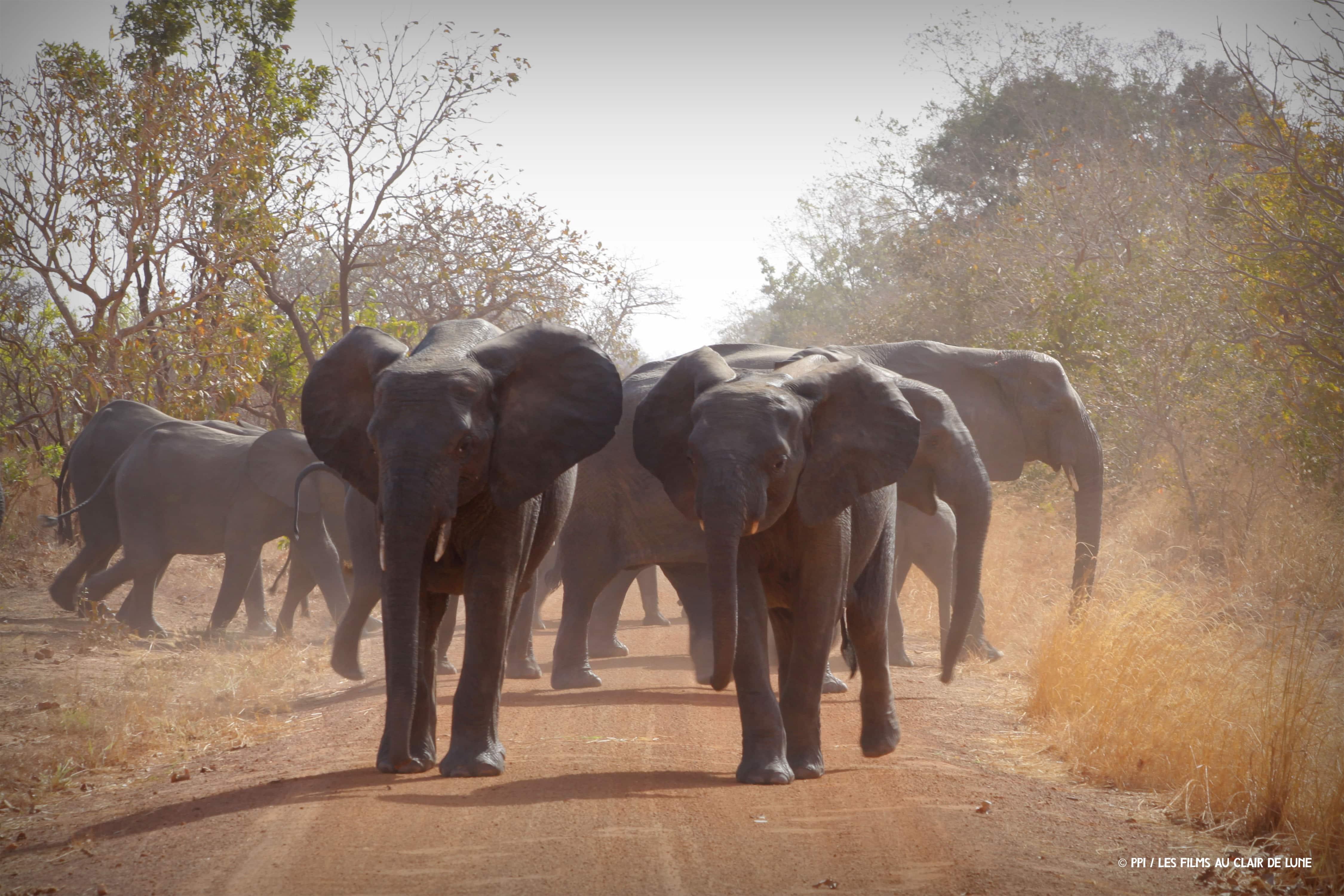 conservation afrique